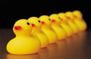 340_ducks